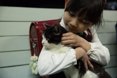 映画「4/猫-ねこぶんのよん-」予告編